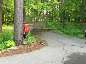 Dead tree is down across the driveway