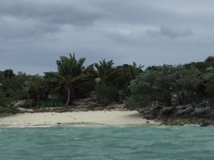 Palm trees being blown on Allan Cay, Bahamas.